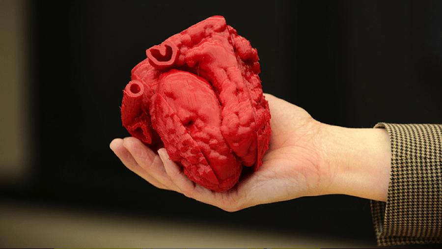 Tejido De Corazón Humano Con Bioimpresión 3d Impresoras3dcom