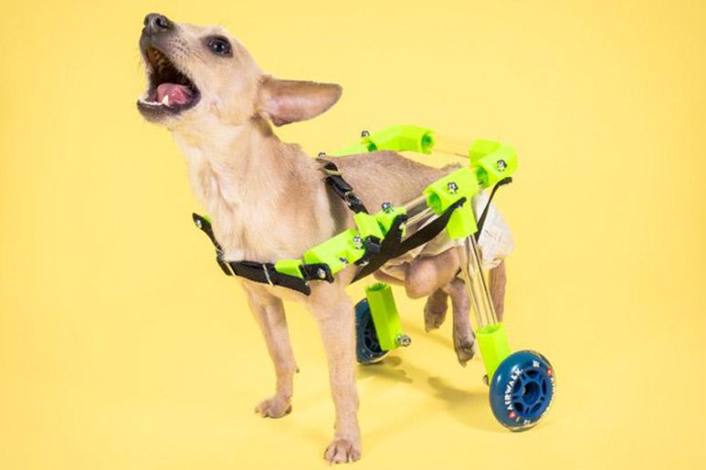 Blog-impresiones-3d-para-mascotas